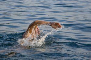 Schwimmen, Kraftausdauer, Muskelaufbau, Abnehmen