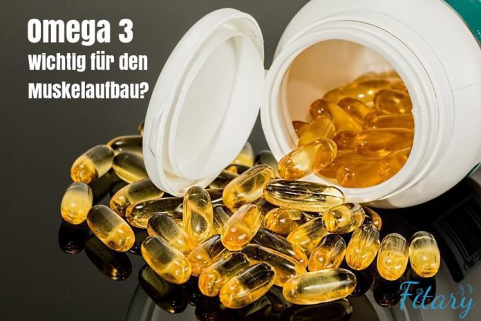 Omega 3 Fischöl Muskelaufbau