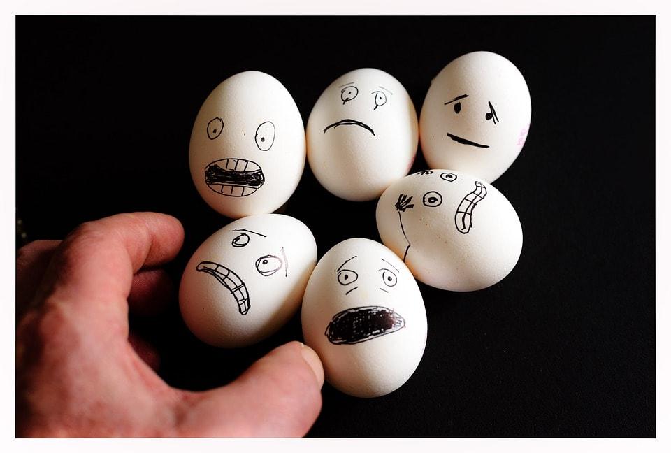 egg-protein ei-protein supplement